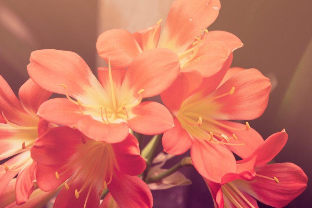 Dans cet article, je vous explique ce qu'est une fleur carnivore et comment se protéger en amour sans avoir à se fermer.